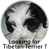 Looking for best breeder? Starte here